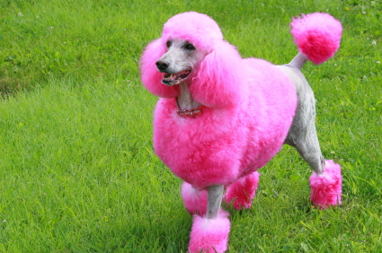 candy crush pet poodle